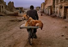 Animals Steve Mccurry MUDEC